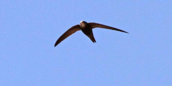 Birding in Lesvos