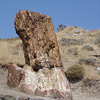 Petrified forest on Lesbos, North Aegean island, Greece