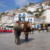 Hydra donkeys, Saronic islands, Greece