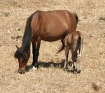 The Skyros pony