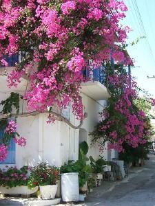 Street in Mochlos village, Siteia region, Crete