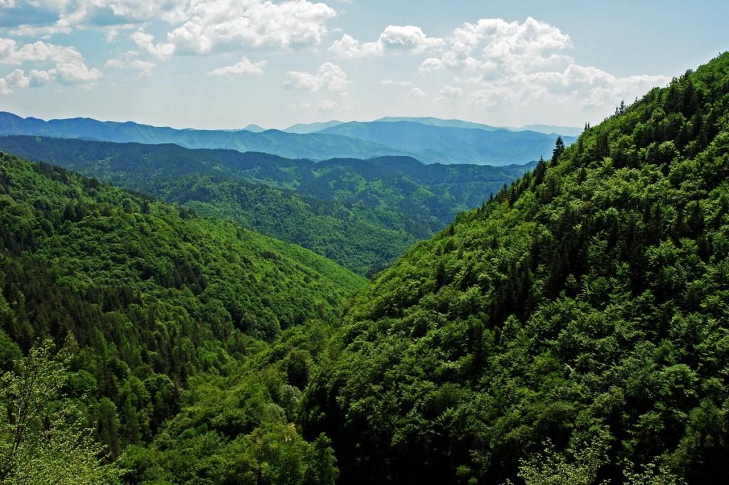Fraktos Forest, Drama Prefecture, Greece - Photo: Sotiris Lambadaridis