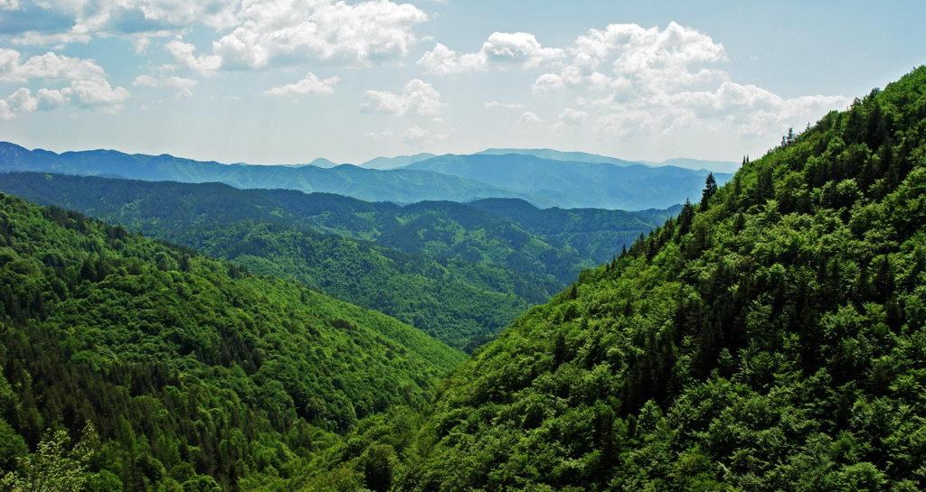 Fraktos Forest, Drama Prefecture, Greece