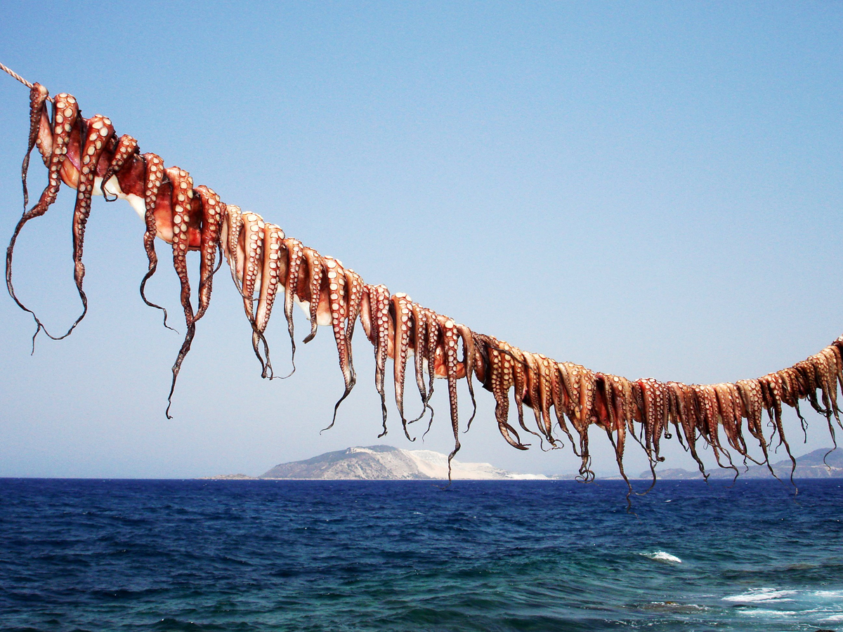 Squids drying in the sun, Nisyros island, Dodecanese, Greece