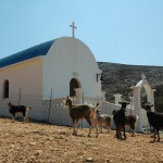 Goats outside a chapel in Skyros, Sporades, Greece