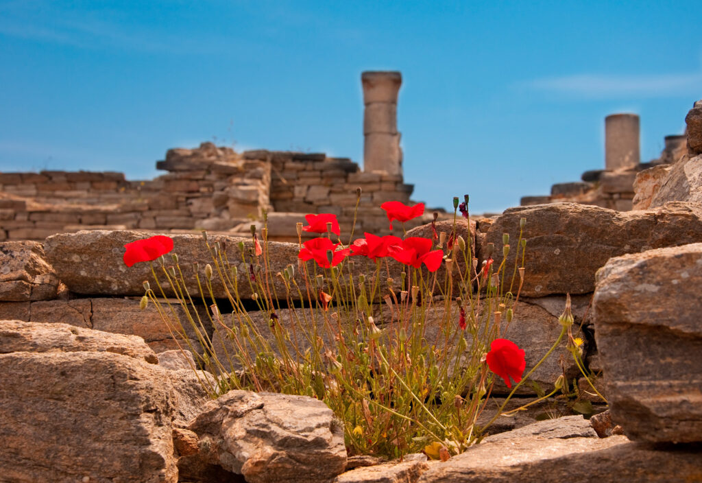 Red poppies against a background of ancient ruins in Delos island, Cyclades, Greece