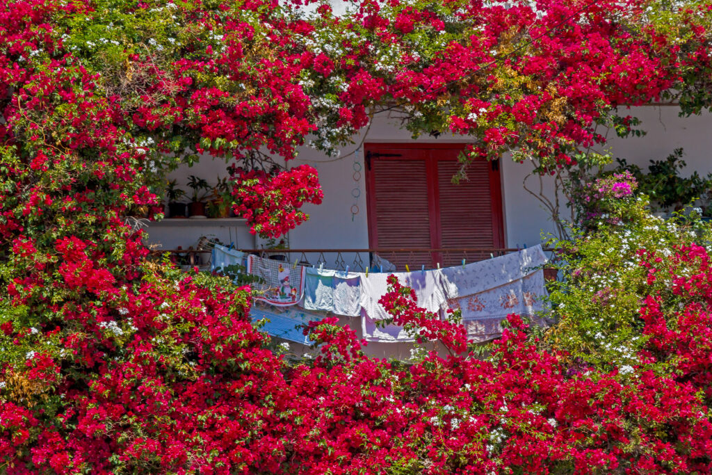 Travel to Tinos Cyclades Greece - flower decorated balcony in Tinos island