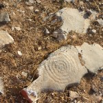 Shards of pottery, Iraklia, Smaller Cyclades, Greece