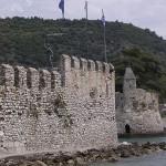 Naupactus seawall