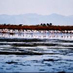 Aitoliko - saltwater swamp