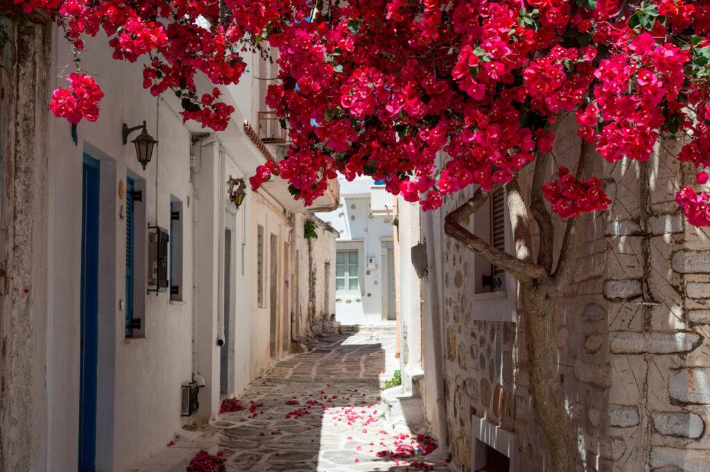 Alley in village in Samos island, North Aegean Sea Greece