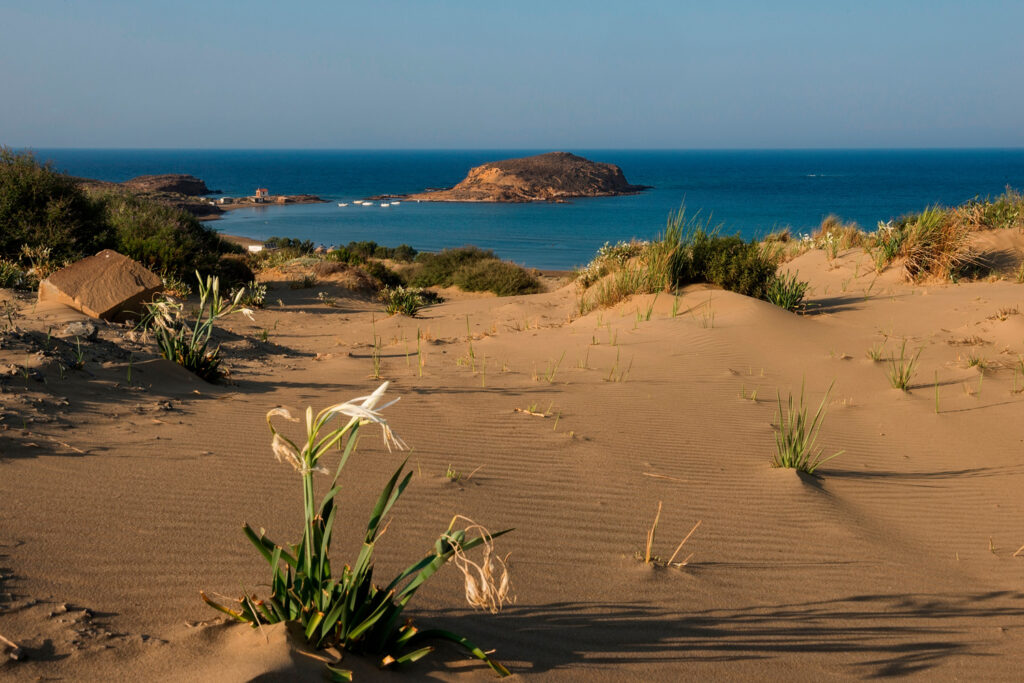 Flowers and sand dunes at Gomati in Lemnos, North Aegean island, Greece