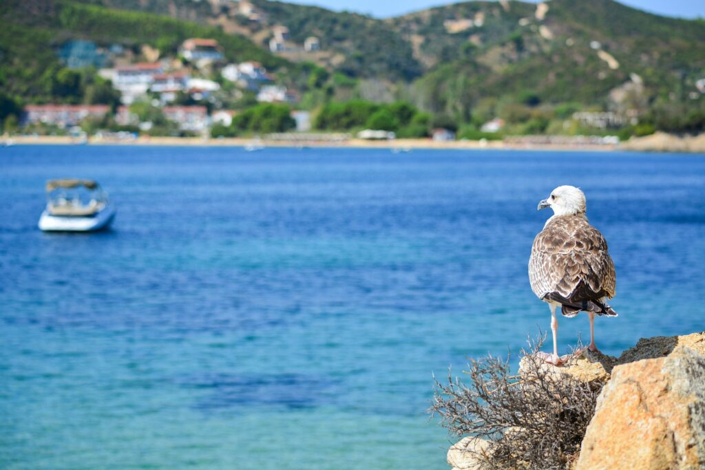 Birding in Greece - seagull by the sea