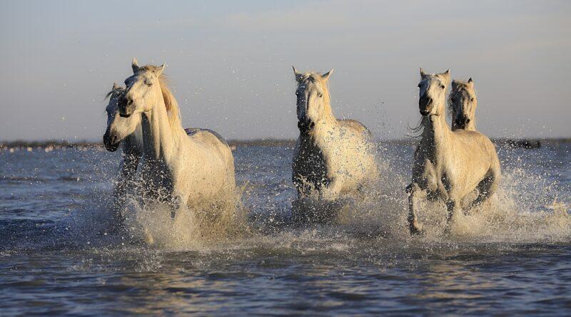Horseback riding in Greece