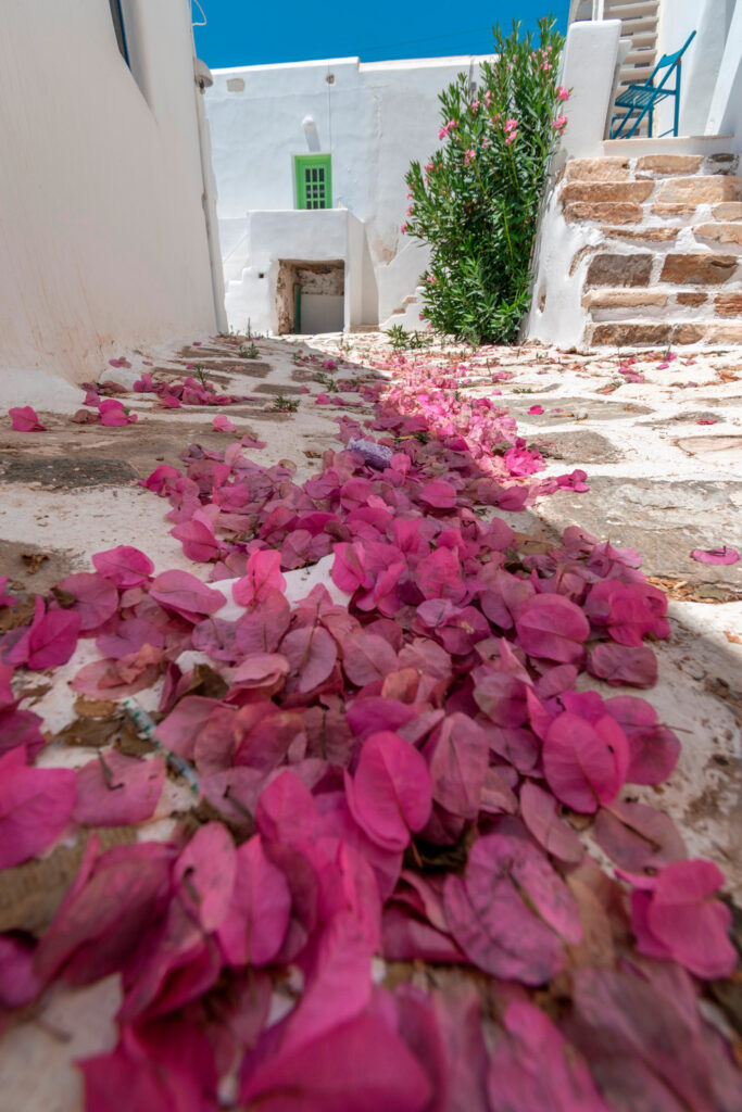 Bougainvellea leaves in traditional village in Antiparos, Cyclades, Greece