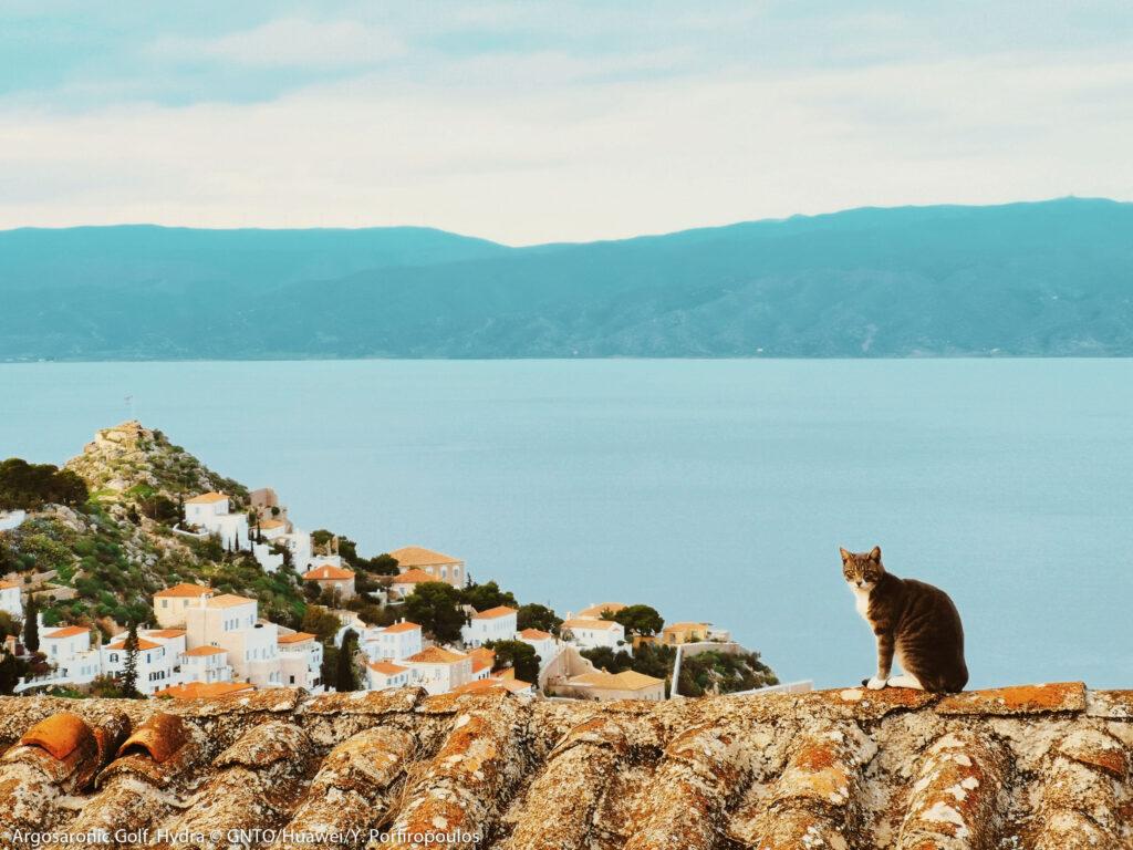 Cat on rooftop in Hydra island, Argo Saronic Gulf, Greece