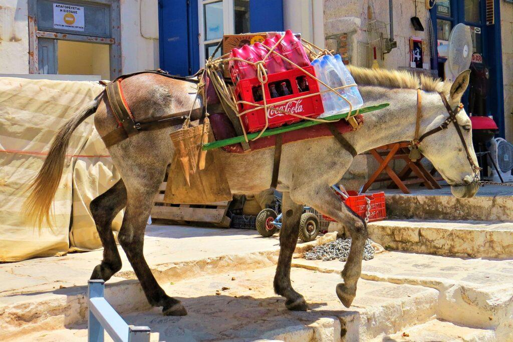 Mule in Hydra, Argo Saronic Gulf, Greece
