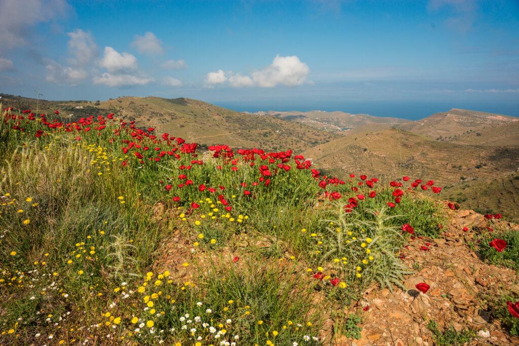 Spring flowers in Kea island, Cyclades Greece