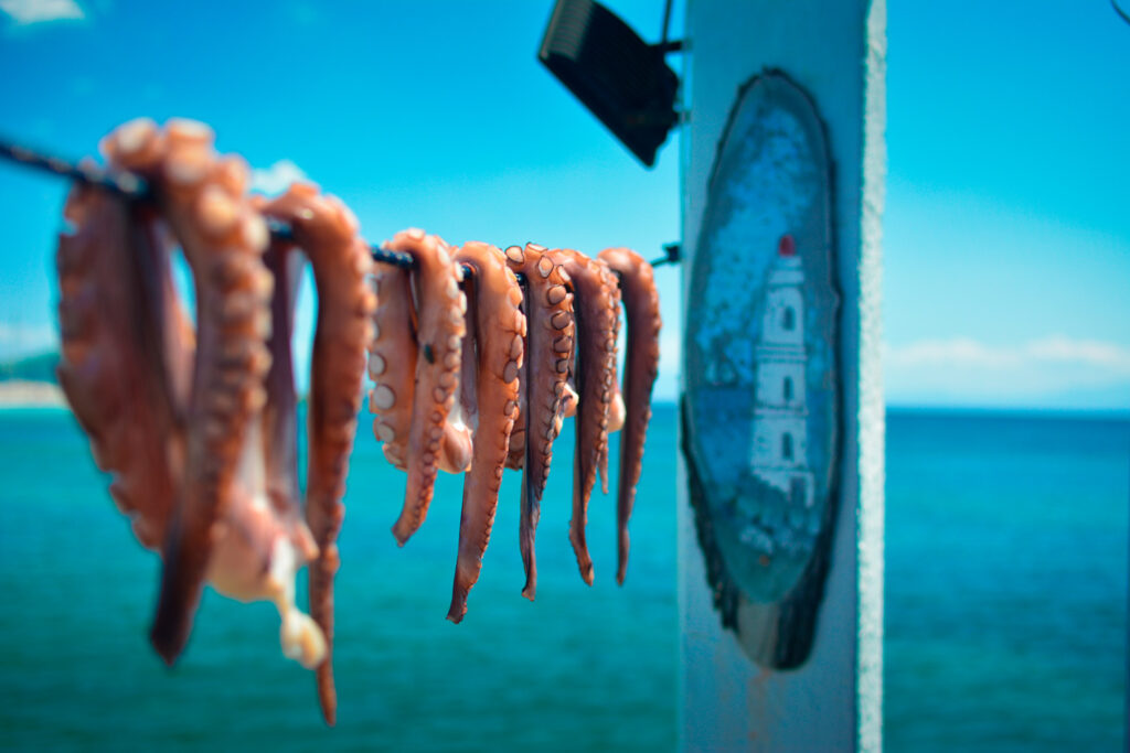 Octopus drying in the sun waiting to be cooked in Skiathos, Sporades Greece