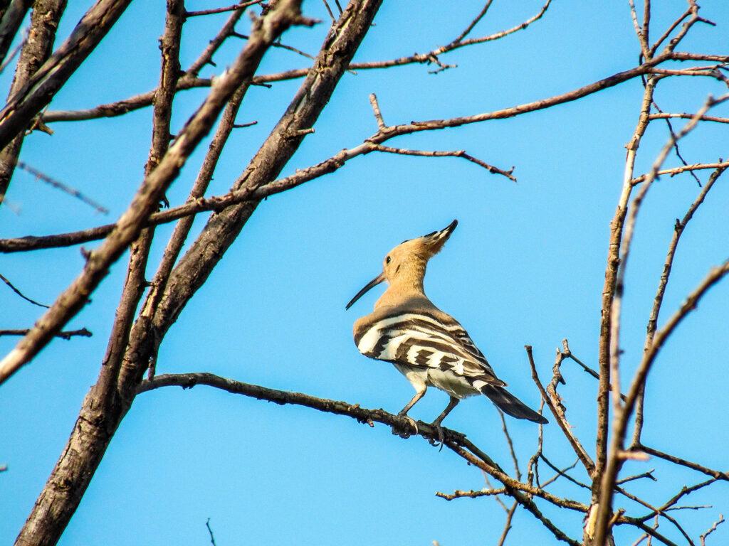 Bird in a tree in Florina, Macedonia Greece