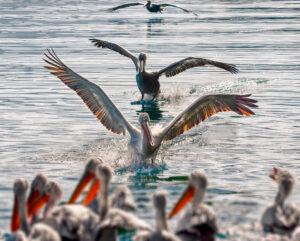 Birds in Kastoria lake, West Macedonia Greece