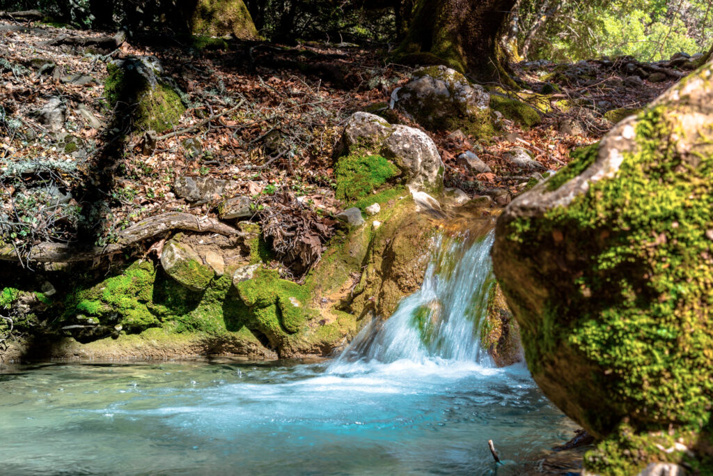 Rouvas forest on Psiloritis mountain, with streams and colorful plantation at spring, Crete, Greece