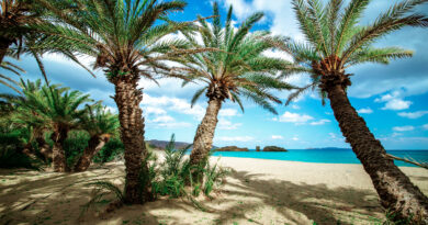 Scenic landscape of palm trees, clouds and tropical beach, Vai, Crete, Greece
